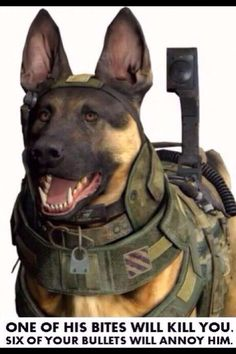 Call of duty ghosts logic. Frickin K9 units suck unless they're for you & mot against you. Lol.