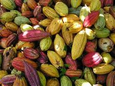 The Beautiful Colors of Cacao!