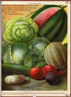 Vintage Vegetable Seed Pack - could use to different ones to decorate cans as containers for centerpieces.  Or as graphics for invitations.  Or superimpose numbers and use to identify tables.  Or all of the above!