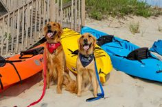 """Just back from an ocean kayak trip - hope the puppies helped paddle ...ahem """"dog paddled"""" : )"""