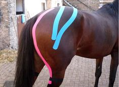 Kinesio taping - can be used in a variety of ways with horses