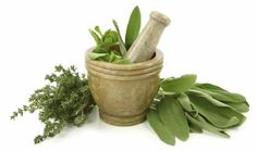 Herbs http://en.wikipedia.org/wiki/Herb