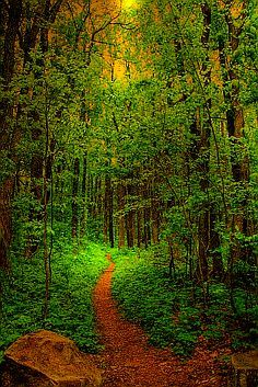 ✯ Forest Path
