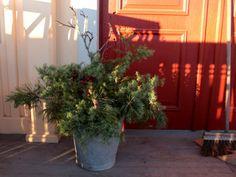 Vinterpynt på trappan | Tina Klingspor Tina, Labrador, Plants, Christmas, Creative, Xmas, Weihnachten, Yule, Planters
