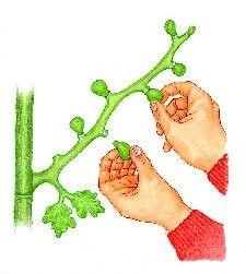 Permaculture Design, Forest Garden, Vegetable Garden Design, About Me Blog, Gardening, Forest Design, Food Food, Nature, Garden