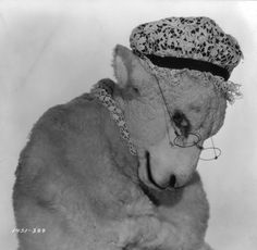 "American actress Mae Marsh (1895–1968) as The Sheep in Paramount's ""Alice in Wonderland"", directed by Norman Z McLeod. (Photo by Hulton Archive/Getty Images). 1933"