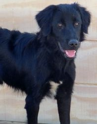 Patton was ADOPTED!
