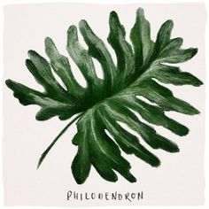 Leafy green from Big Leaves, Botanical Drawings, Greenery, Plant Leaves, Hawaii, Illustration, Artwork, Plants, Instagram