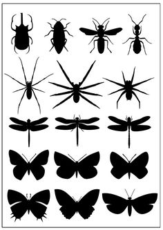 Insects Set [EPS File]