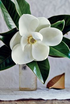 Magnolias on Pinterest | Silk Flower Arrangements, Dahlias and ...