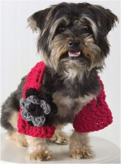 Top 10 Cute DIY Dog Sweaters (With Free Crochet Patterns)  What an adorable little dog.  ♥♥