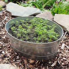 Amazon.com : Achla Designs Standard Oval Galvanized Steel Tub : Patio, Lawn & Garden