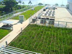 Telhado Verde é Cidade Jardim   Telhado Verde, Telhado Vivo!   Village Mall   Rio de Janeiro   Cases Item