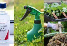 6 Glycerin Uses In The Garden