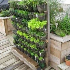Build a vertical garden from recycled soda bottles DIY projects for everyone! - Build a vertical garden from recycled soda bottles DIY projects for everyone! Vertical Garden Design, Vertical Gardens, Vertical Planting, Small Vegetable Gardens, Vegetable Gardening, Small Gardens, Pot Jardin, Recycled Garden, Bottle Garden