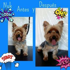 El blog de Patty's Dogs: Antes y después