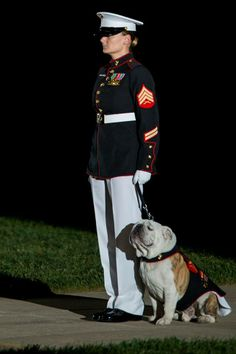 Sgt. Katie Maynard, Lance Cpl. Chesty XIV's handler, walks Chesty down center walk during a Friday Evening Parade at Marine Barracks Washington, D.C., May 2. (Official Marine Corps photo by Cpl. Dan Hosack/Released)