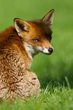 The Sly Fox sat in the shadow waiting for the danger to pass, he waited 30 minutes before he came out he looked up to see the faintest sight of stuck fire flies. Stuck Fire Flies= Starts XD