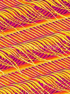 This is a small portion of a feather, showing two barbs (running from upper left to bottom right). Material Science, British Wildlife, Us Images, Flower Photos, Deco, Pigeon, Beautiful Patterns, Charts, Feathers