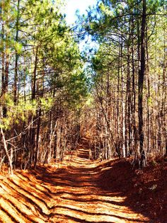 Day 15 - Pine forest . . .