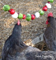 Fresh Eggs Daily®: Edible Christmas Garlands for your Chickens