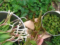 Medicinal Uses of Culinary Herbs