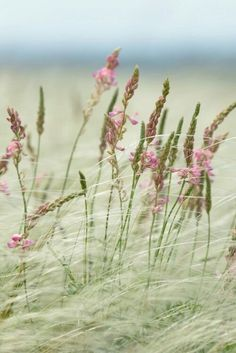 Where wild things grow outdoors nature flowers grass Jolie Photo, Belleza Natural, Beautiful World, Simply Beautiful, Mother Nature, Pink And Green, Pink Beige, Wild Flowers, Beach Flowers