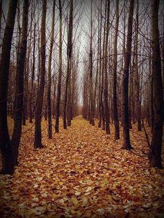 Leading lines trees autumn