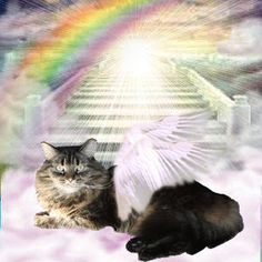 images of cats with angel wings | Catster
