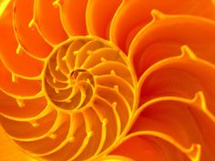 Images and videos of spiral Orange Color, Orange Zest, Light Orange, Colour, Spirals In Nature, The Golden Mean, Power Colors, Fractal Art, Fractals