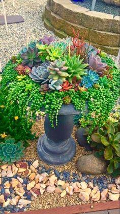 Ideas for Creating Amazing Garden Succulent Landscaping Succulents Pick ou. Ideas for Crea Succulent Landscaping, Succulent Gardening, Cacti And Succulents, Garden Planters, Planting Succulents, Backyard Landscaping, Container Gardening, Landscaping Ideas, Organic Gardening