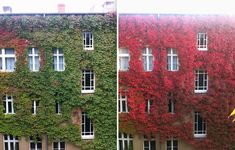 12 Before and After Photos Show Transformations of Autumn