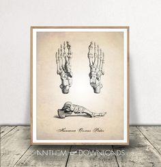 Human Anatomy Foot Human Anatomy PRINTABLE Human Anatomy