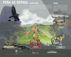 Flora y fauna en Peña de Bernal @AntonioSuarez1