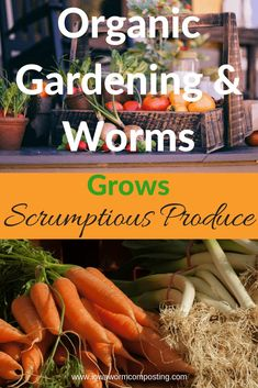 Organic gardening and worms are the perfect match. Composting worms create the organic worm castings that will boost the organic garden's production. Vermicast also provides disease-resistance and pest-deterrents which are vital in an all-natural garden. Organic Insecticide, Organic Fertilizer, Organic Gardening Tips, Organic Farming, Sustainable Gardening, Grow Organic, Organic Fruit, Worm Composting, Garden Guide