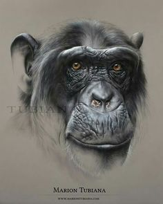 Shop / Shop Pastels animal and quins & Photographs & Paintings Crayons Pastel, Pastel Pencils, Animal Sketches, Animal Drawings, Art Drawings, Animal Painter, Animal Paintings, Pastel Portraits, Pet Portraits