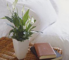 Top 10 Air-Purifying Plants for Your Home: Peace Lily Removes: * Alcohols and acetone. * Trichloroethylene. * Benzene and Formaldehyde. Benefits: * Beautiful plant with gentle white flowers, easy to care for. * Strong and peaceful energy.