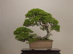 The Omiya Bonsai Art Museum, Saitama