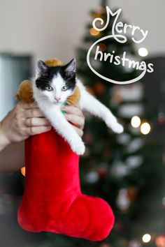 Patra Bene Animals And Pets, Cute Animals, Winter Christmas, Youtubers, Christmas Stockings, I Am Awesome, Diy And Crafts, Celebrity, Holiday Decor
