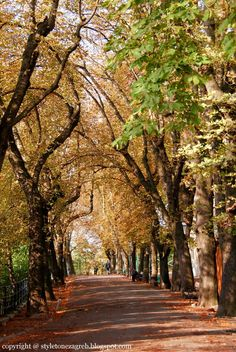 Tree-lined street in Zagreb, Croatia. Zagreb is the capital and the largest city of the Republic of Croatia. It is located in the northwest of the country, along the Sava river, at the southern slopes of the Medvednica mountain. (V)