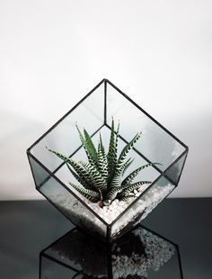Square Terrarium - for air plant or succulents - Stained Glass