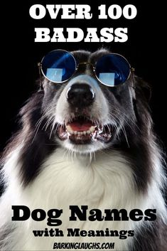 So you need a badass dog name.Barking Laughs has you covered with this badass dog names list for both girl dogs and boy dogs. Cool dog rocking some shades. Several tough dog names for your new puppy! Cool Dog Names Girls, Boy Dog Names Unique, Tough Dog Names, Girl Dog Names, Best Dog Names, Best Dogs, Cool Pet Names, Puppies Names Female, Female Dog Names