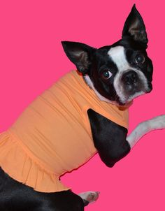Your pup will look extra flirty in this Tshirt Dress! Available in a 9 colors and sizes XXS-XL. 100% Cotton. Not a lot of stretch