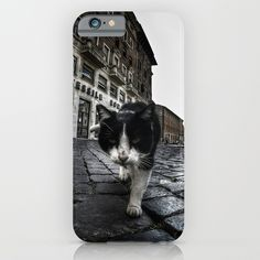 Close up portrait of a tough street cat in the city of Rome.  #cat #streetcat #animal #streetphotography #photography #gopro #wideangle #street #city #cityphotography #rome #italy #iphone #case