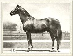 Nick Purdom - Man O' War won all 11 of its races in Man O' War could have won the triple crown but did not participate in all three races. Man O' War won 20 out 21 races he raced in. Faster Horses, Thoroughbred Horse, Appaloosa Horses, Man Of War, Sport Of Kings, Racehorse, Horse Pictures, Horse Racing, Beautiful Horses