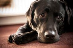 Puppy Eyes ©Jean-Pierre Benjamins