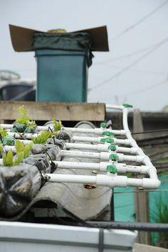 Ecotecho, recicla las botellas y haz algo productivo con ellas