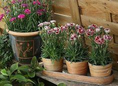 Balcony Plants, Plants, Garden