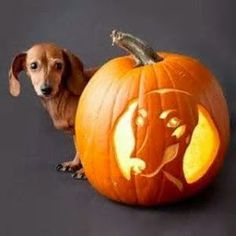 Cool Pumpkin Carving Ideas: Check Out The Best of 2013 Pumpkin Carvings @Kaiti Stoeckel