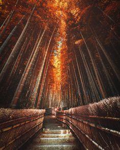 Colorful Autumn in Japan: Landscape Photography by Daisuke Uematsu Japan Travel Destinations Japan Landscape, Abstract Landscape, Landscape Paintings, Acrylic Paintings, Beautiful Landscape Photography, Autumn Photography, Amazing Photography, Korean Photography, Photography Kids